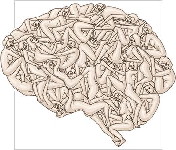 sex-on-the-brain