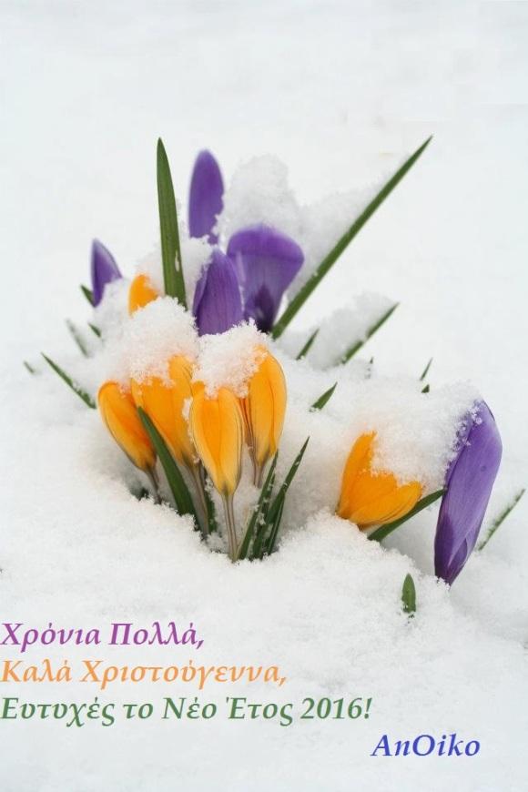 WinterCrocusMarryChristmas2015_byAnOiko