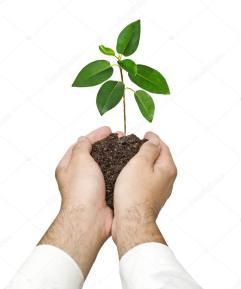 depositphotos_35903115-stockafbeelding-plantgoed-in-handen