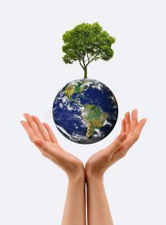 mains-la-jeune-pousse-et-notre-terre-de-planète-16346799