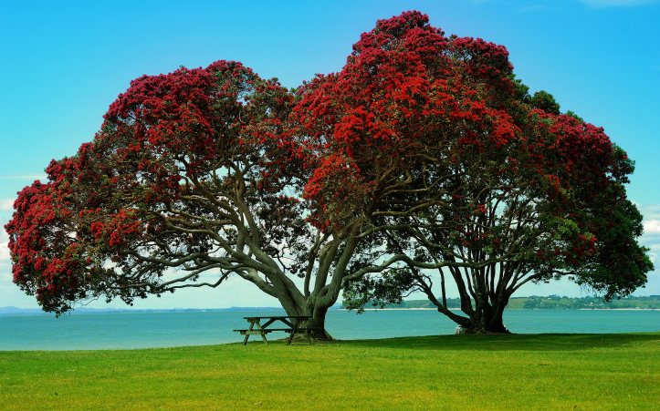 7005923-twin-trees