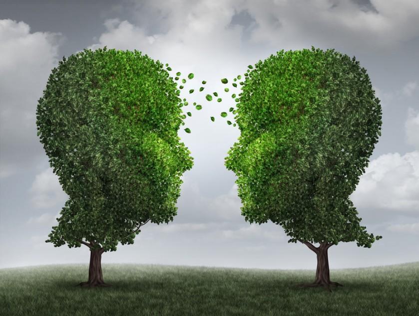 curiozitato-despre-copaci