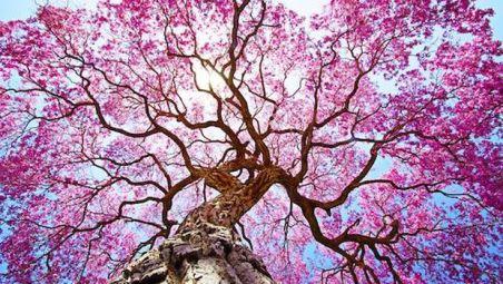 flowering trees.jpg.620x0_q80_crop-smart_upscale-true