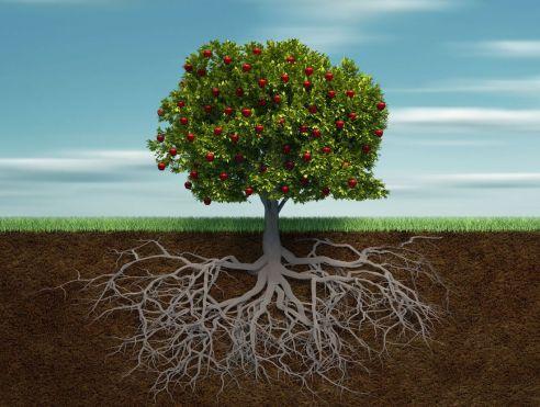 tree_roots_1