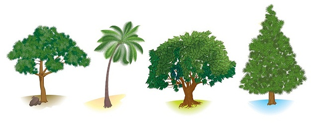 Different-Types-of-Trees-And-Their-Herbal-Uses