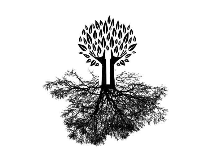 tree-2972896_960_720.png