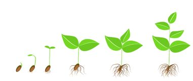 plant-stages-growth-development-seed-to-adult-vector-illustration-110666728