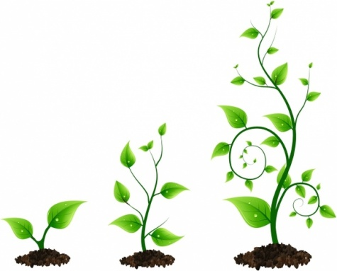 three_green_plant_growth_cycle_312598